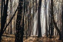 Profondément dans la forêt dans les montagnes photographie stock libre de droits