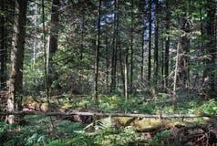 Profondément dans la forêt dense photo libre de droits