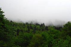 Profondément dans la forêt quelque part dans les Frances photos libres de droits