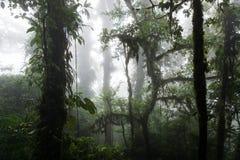 Profondément dans la forêt tropicale brumeuse luxuriante Photographie stock