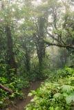 Profondément dans la forêt tropicale brumeuse luxuriante Images libres de droits