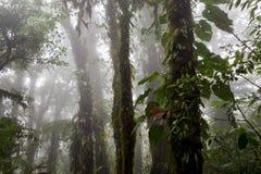 Profondément dans la forêt tropicale brumeuse luxuriante Images stock