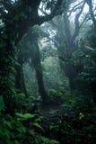 Profondément dans la forêt tropicale luxuriante photographie stock libre de droits