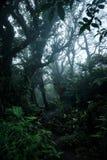Profondément dans la forêt tropicale luxuriante photo libre de droits