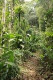 Profondément dans la haute jungle Images libres de droits
