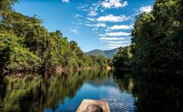 Profondément dans la jungle d'Amazone images libres de droits