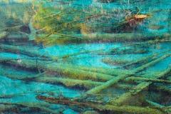 Profondément dans le lac avec les arbres morts Images libres de droits