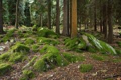 Profondément dans les bois Photos stock