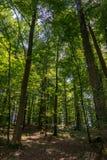 Profondément dans une forêt Image stock