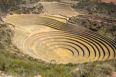 Profond comme l'amphithéâtre, les terrasses du Moray Images libres de droits