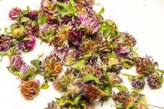 Profondeur de coupe Têtes sèches de trèfle violet, se situant dans des navires en osier Plantes médicinales Usine, traitement des Photographie stock