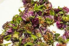 Profondeur de coupe Têtes sèches de trèfle violet, se situant dans des navires en osier Plantes médicinales Usine, traitement des Image stock