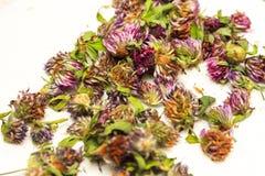 Profondeur de coupe Têtes sèches de trèfle violet, se situant dans des navires en osier Plantes médicinales Usine, traitement des Photographie stock libre de droits