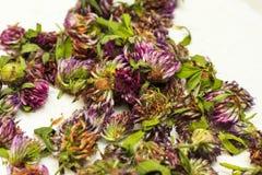Profondeur de coupe Têtes sèches de trèfle violet, se situant dans des navires en osier Plantes médicinales Usine, traitement des Photos stock