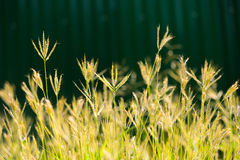 Profondità di campo l'erba del fiore Fotografie Stock