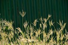Profondità di campo l'erba del fiore Immagini Stock Libere da Diritti