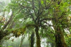 In profondità in foresta pluviale nebbiosa fertile Fotografie Stock
