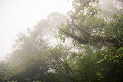 In profondità in foresta pluviale nebbiosa fertile Fotografia Stock Libera da Diritti