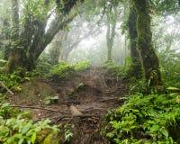 In profondità in foresta pluviale nebbiosa fertile Fotografie Stock Libere da Diritti