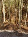 In profondità nel legno Fotografie Stock Libere da Diritti