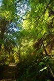 In profondità nella foresta fotografie stock libere da diritti