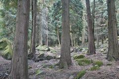 In profondità nella foresta fotografia stock