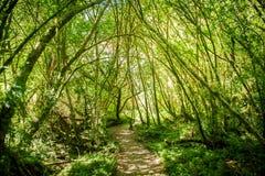 In profondità nella foresta Immagine Stock Libera da Diritti