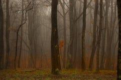 In profondità nella foresta Immagine Stock