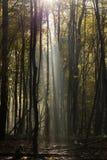 In profondità nella foresta nelle montagne Fotografie Stock Libere da Diritti