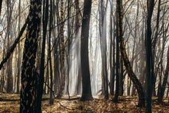 In profondità nella foresta nelle montagne Fotografie Stock