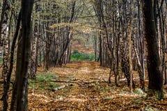 In profondità nella foresta nelle montagne Immagine Stock Libera da Diritti