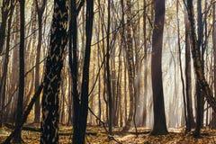 In profondità nella foresta nelle montagne Fotografia Stock