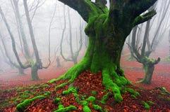 In profondità della foresta Immagine Stock Libera da Diritti