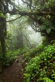 Profondément dans la forêt tropicale brumeuse luxuriante Image libre de droits
