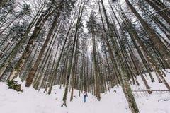 Profondo dentro la foresta bavarese Fotografie Stock