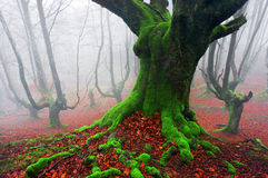 Profundamente da floresta Imagem de Stock Royalty Free