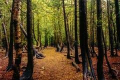 Profundamente dentro da floresta, Bruce Peninsula, SOBRE, Canadá imagem de stock