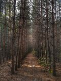 Profundamente en bosque Foto de archivo