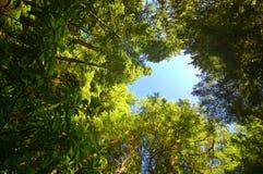 Profundamente en el bosque Imagenes de archivo