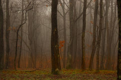 Profundamente en el bosque Imagen de archivo
