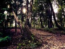 Profundamente en el bosque Imagen de archivo libre de regalías