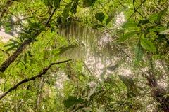 Profundamente en la selva densa ecuatoriana Imágenes de archivo libres de regalías