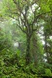 Profundamente en selva tropical de niebla enorme Imágenes de archivo libres de regalías
