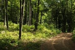 Profundamente - estrada de floresta verde Fotos de Stock Royalty Free