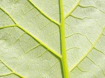 Profundamente - folha verde. Elemento do projeto. Fotos de Stock Royalty Free