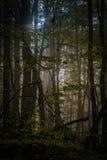 Profundamente na floresta nas montanhas Foto de Stock Royalty Free