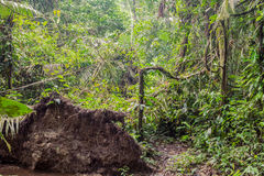 Profundamente na selva tropical úmida imagens de stock royalty free