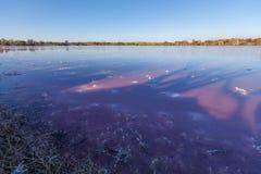 Profundamente - superfície roxa de um lago de sal résistente, Murray-por do sol do rosa Nat Imagens de Stock Royalty Free