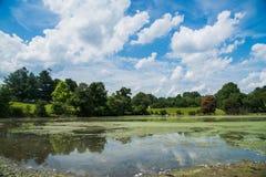 Profunde Wolken auf schönem See mit Bäumen Lizenzfreies Stockbild
