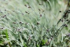 Profundidad baja de la foto del campo, solamente pocas piezas de plantas en el foco, brote de flor rosado del clavo en sombra sua fotos de archivo